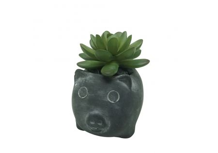 Succulent in Pig Pot