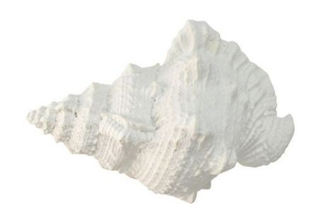 White Poly Sea Snail Shell