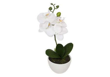 Orchid Plant in White Pot
