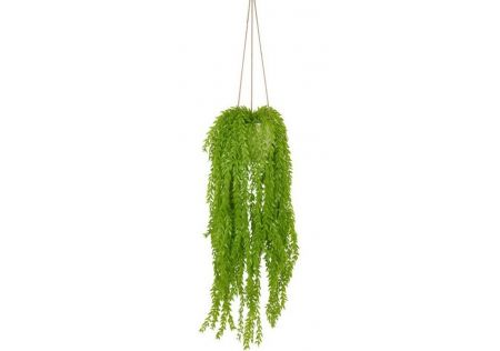 Light Green Hanging Plant in Pot